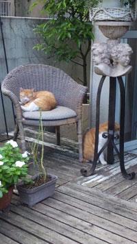 OPAギャラリー隣の猫.jpg